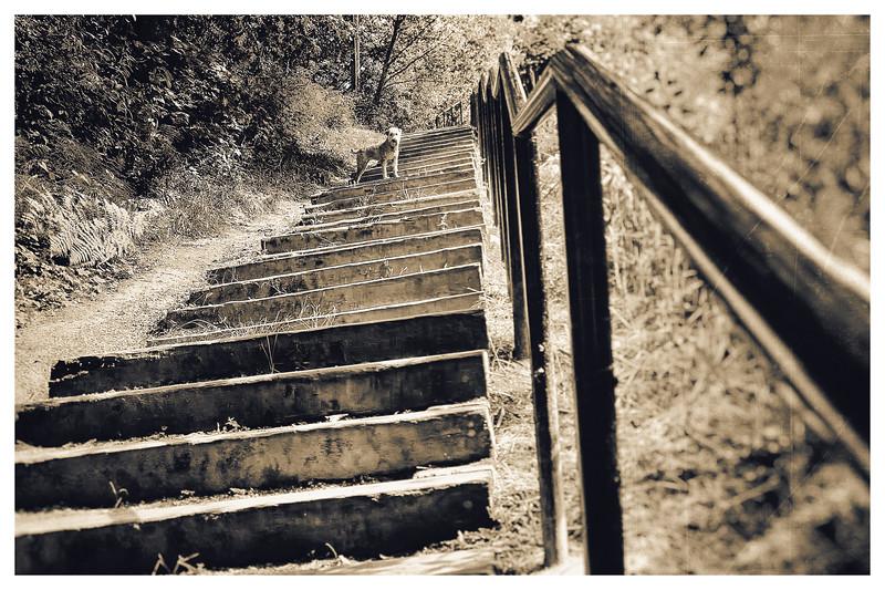 Olive-Stairway-1020_20140619_16_26_05_Pro__highres.jpg