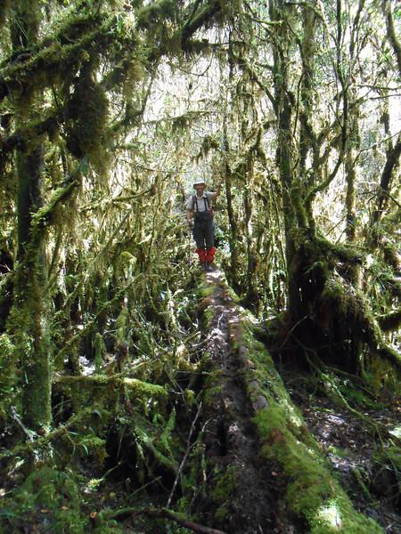 More jungle.