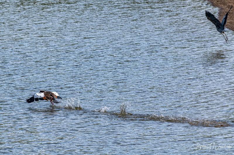 Ardingly Reservoir-8294-Edit.jpg
