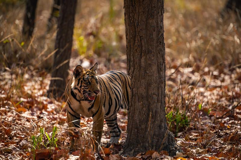 India_April_2019-2436.jpg