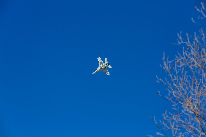 Blue Bird Jan 25-4257.jpg