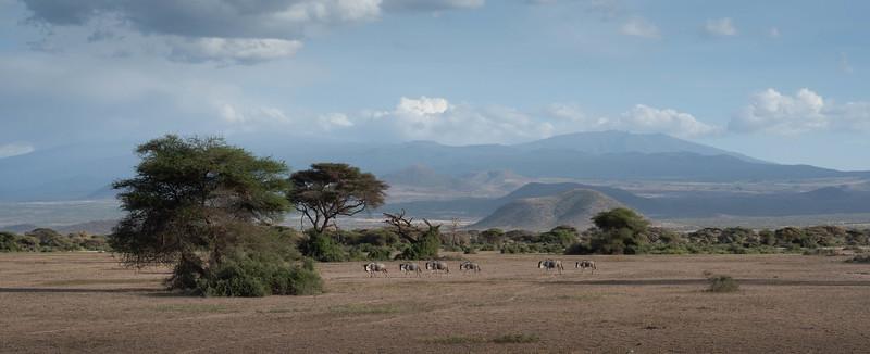 Mt Kilimanjaro and Wildebeest