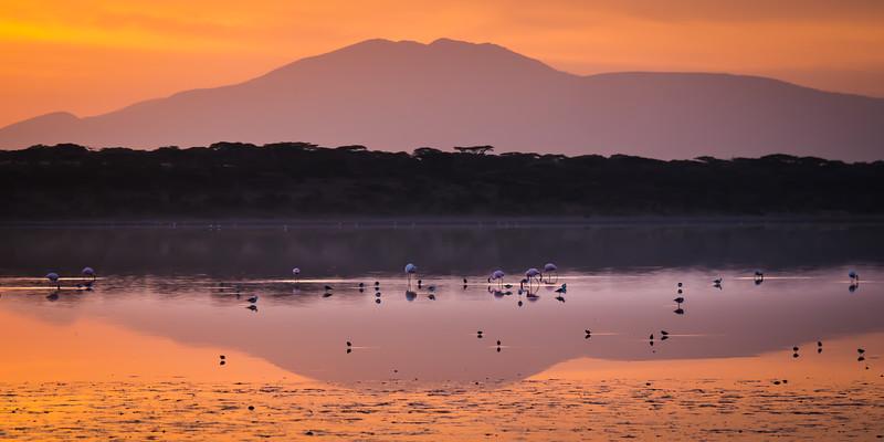 Flamingos, Ndutu, Tanzania