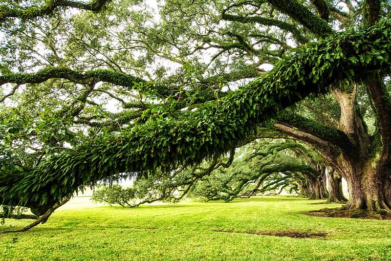 tree branch_.jpg