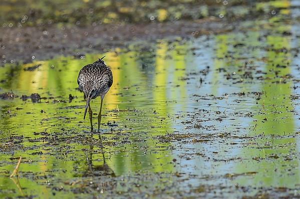 7-28-14 Pond Birds