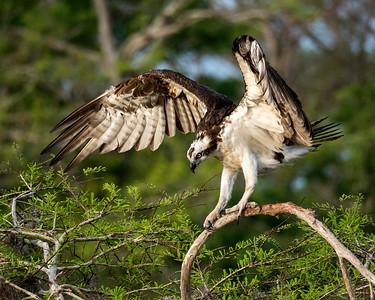Perched Birds (#102)