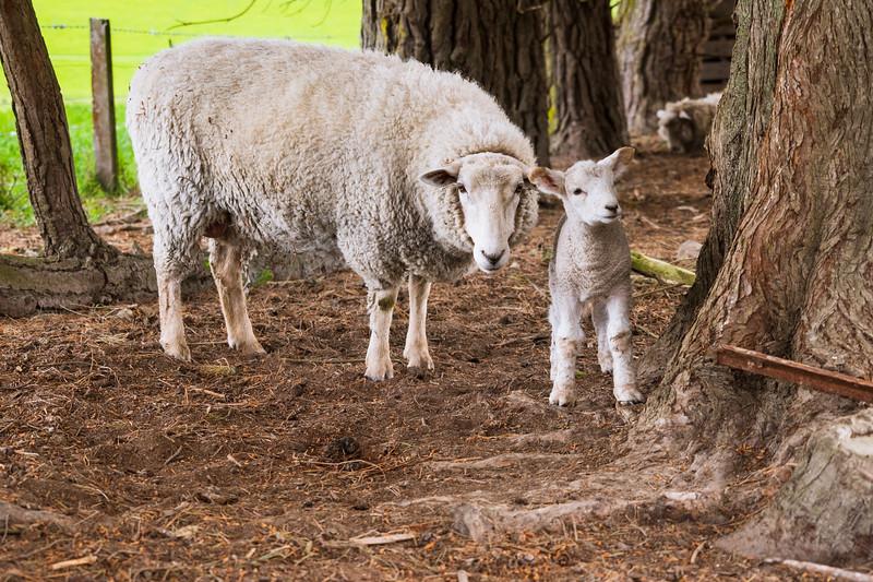 Farm Visit 031118-165.jpg