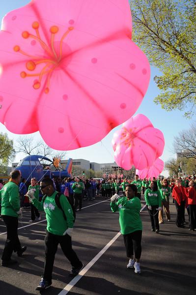 National Cherry Blossom Festival Parade 1