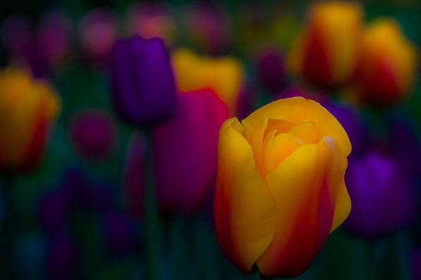 Glorious Blooms