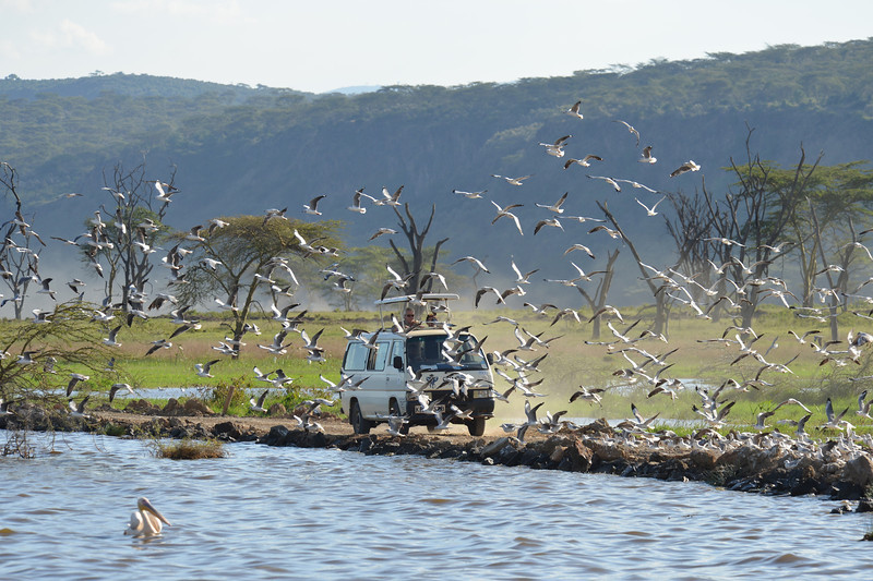 East Africa Safari 117.jpg