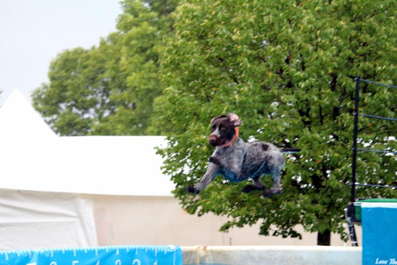 2015.8.7 Winnebago County Fair Dock Dogs (3).JPG
