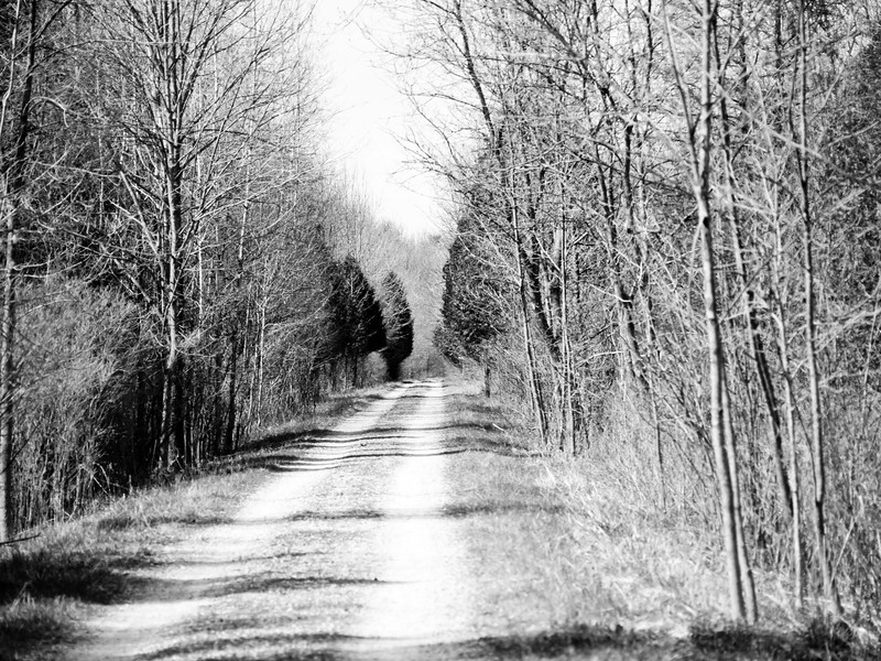 The contrast of the natural light was amazing. Expect to see more of this road outside of Paris Ontario!!