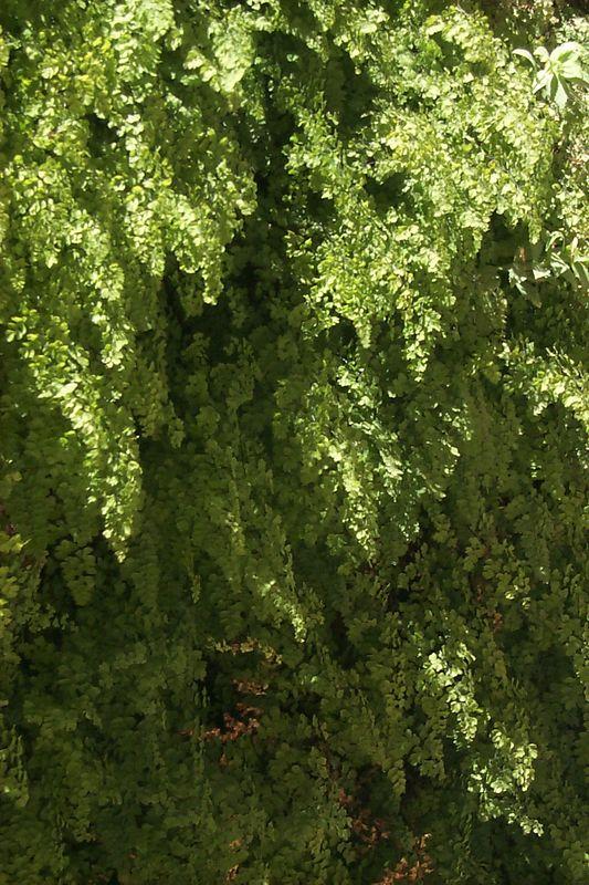 Ferns   (Jun 08, 1999, 02:34pm)