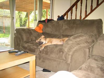 Eddy aka The Pup Who Lived