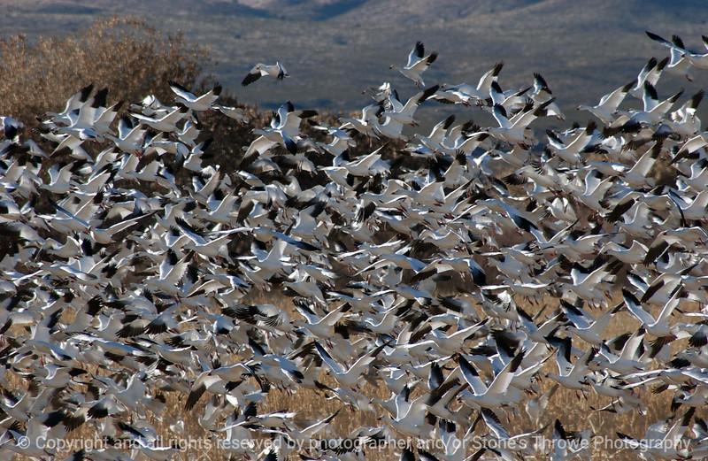 birds-bosque_del_apache_nm-01dec06-9821