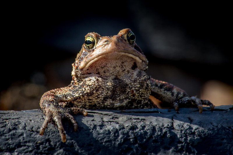 toad unimpressed-5903.jpg