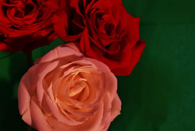 Roses 004.JPG