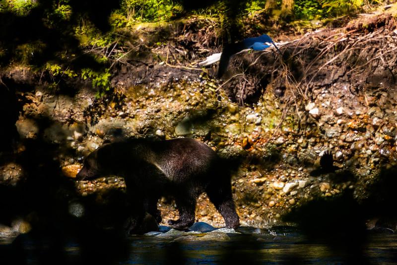 150910_GrizzlyForest_4464.jpg