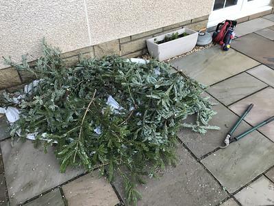 2020 Christmas Tree Chainsaw Massacre....