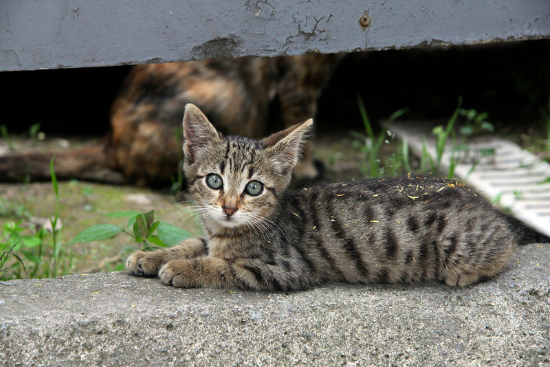 Turkish kitten outside Hagia Sophia