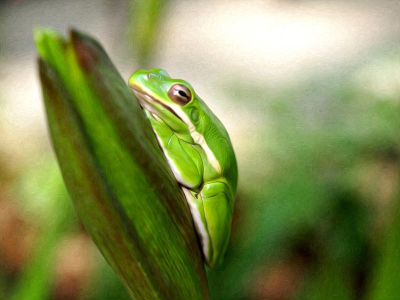 A6-treefrog2painting.jpg