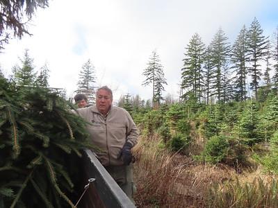 Tree Pickup - Dec 6