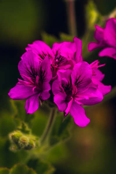 Crane's bill with adjusted blue channel - Using single color channel Tone Curves - After exploring the RGB Tone Curve, it is now time to examine what we can achieve by using the Red, Green, and Blue Color Channels of the Tone Curves.