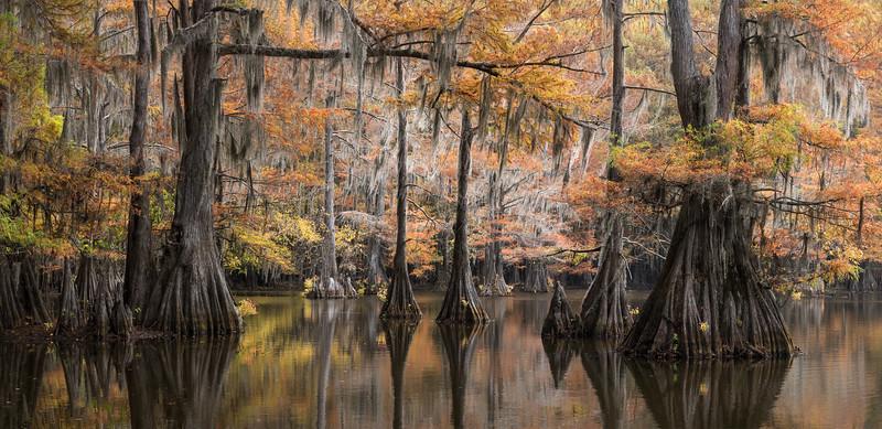 Cypress_Swamps_1117_PSokol-1455-Pano-Edit-3.jpg