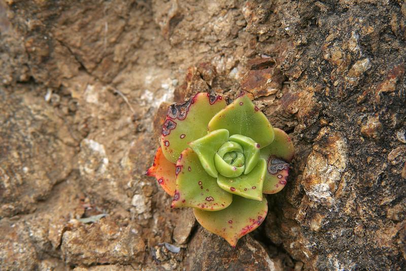 4736 Succulent.jpg