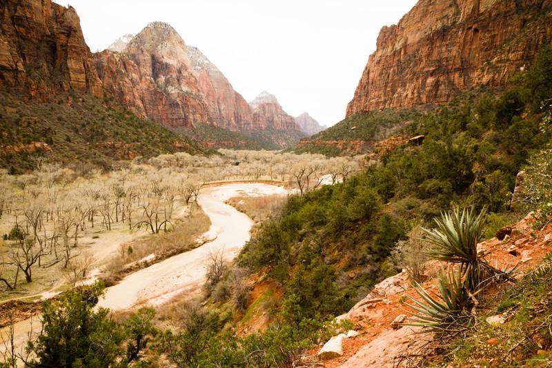 Nádherné údolí s řekou a téměř bílými stromy.