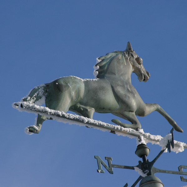 horse vane0981.jpg