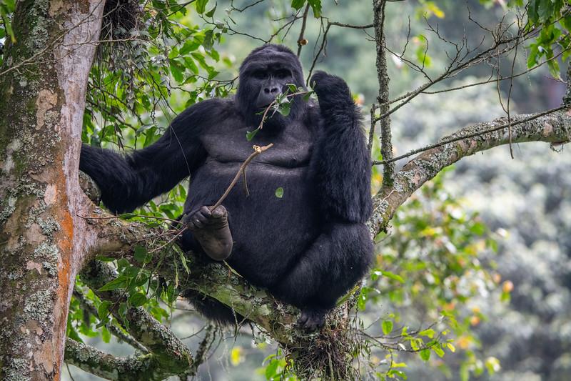 Uganda_T_Gor-2650.jpg