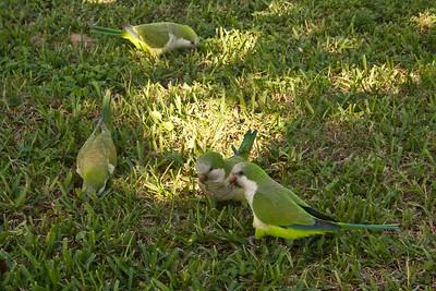 Florida 2009: Sawgrass Recreation Park