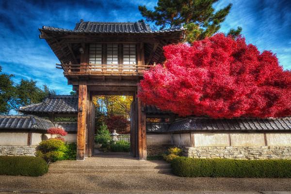 Ft. Worth - Japanese Gardens - 2013-12-04