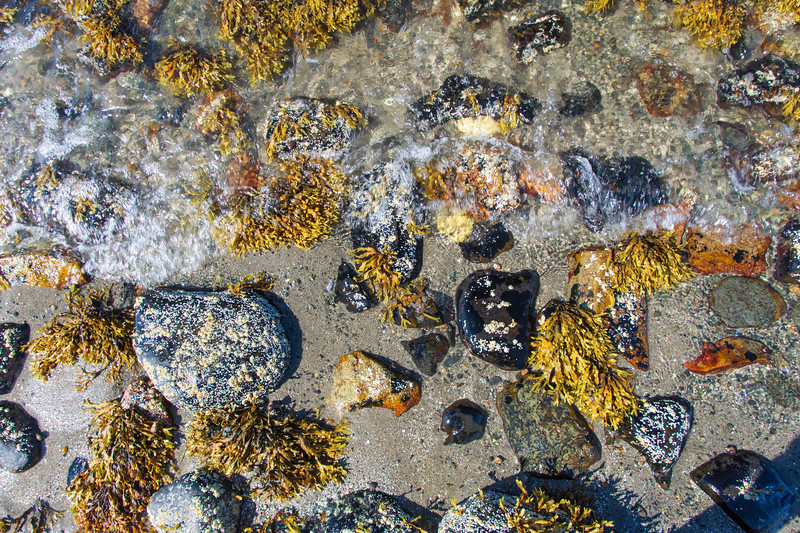 Low-tide-beach-closeup.jpg