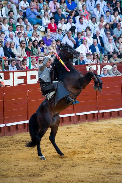 Bullfighting H11.jpg