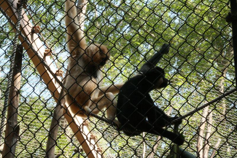 monkeys playing.jpg