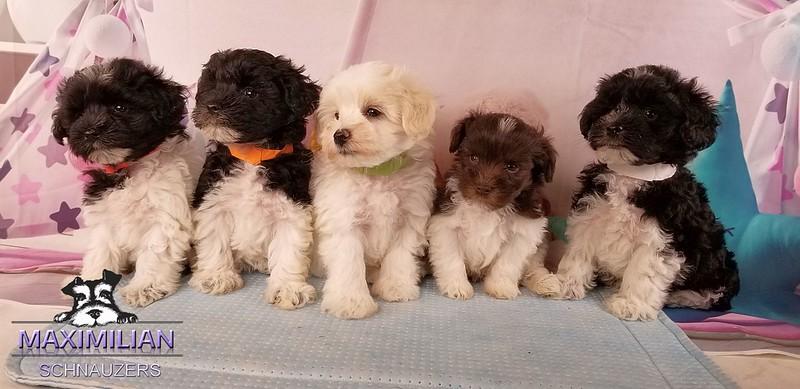 Mystic Pups 014.jpg