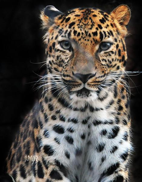 Leopard spotted jpg copy.jpg