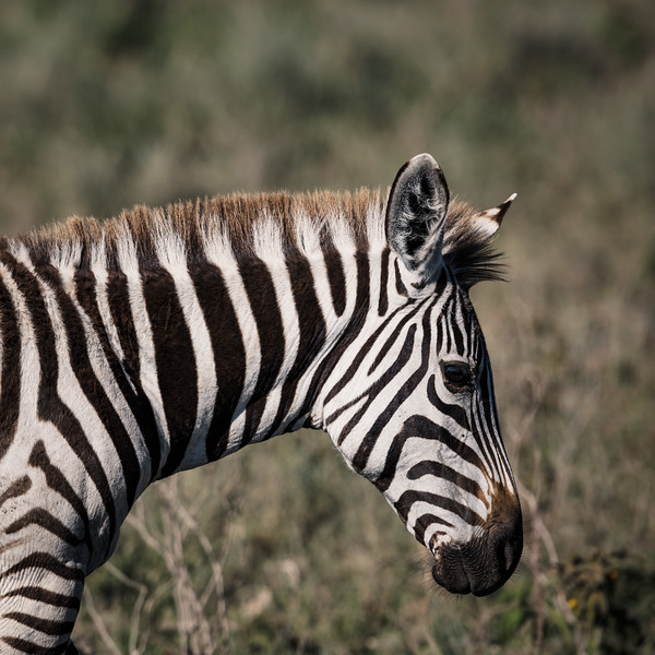Tanzania_Feb_2018-401.jpg