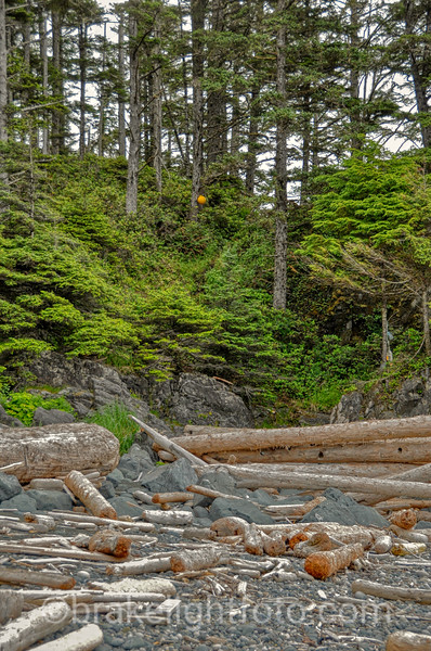 The Nootka Trail