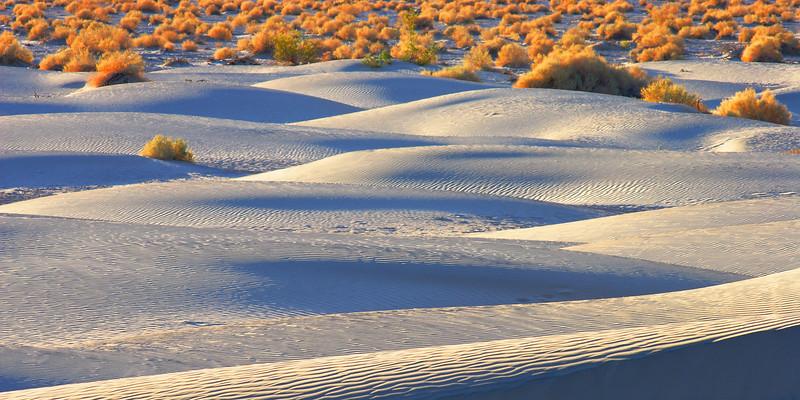 Mesquite Dunes, Morning Death Valley National Park California