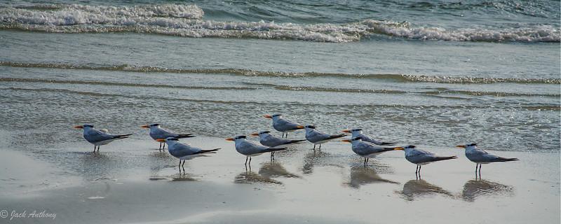 gulls in a row_2211.jpg