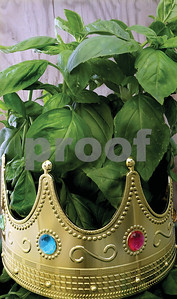 basil-is-the-king-of-herbs