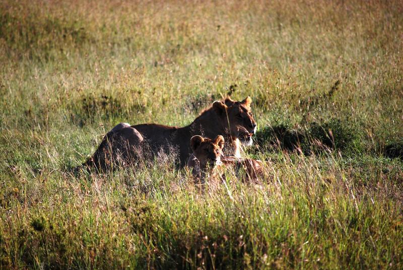 Serengeti (114).JPG
