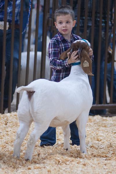 kay_county_showdown_goats_20191207-103.jpg