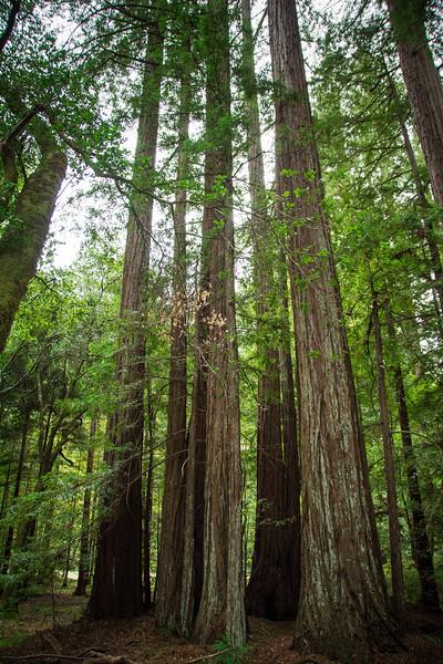Redwood-4.jpg