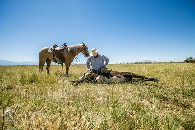 Utah Ranch life