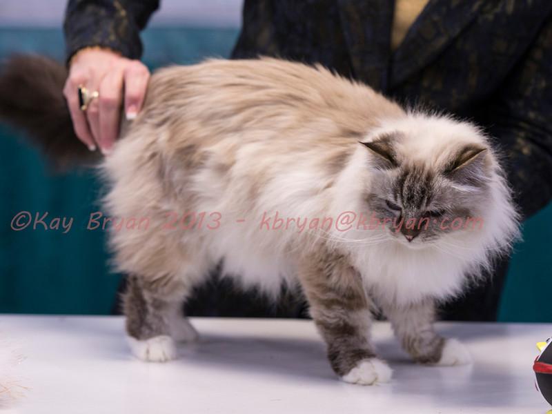 CatShow2014154.jpg