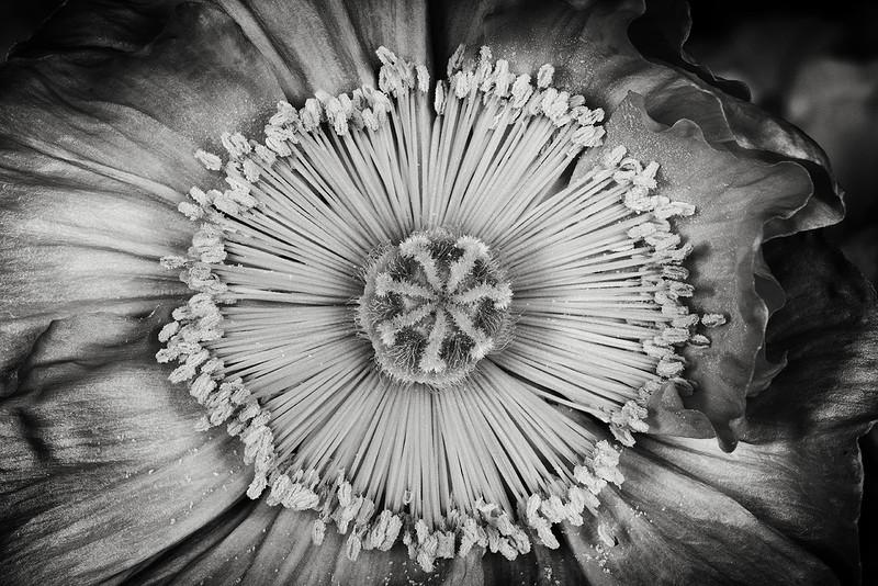 poppy-08-april.jpg